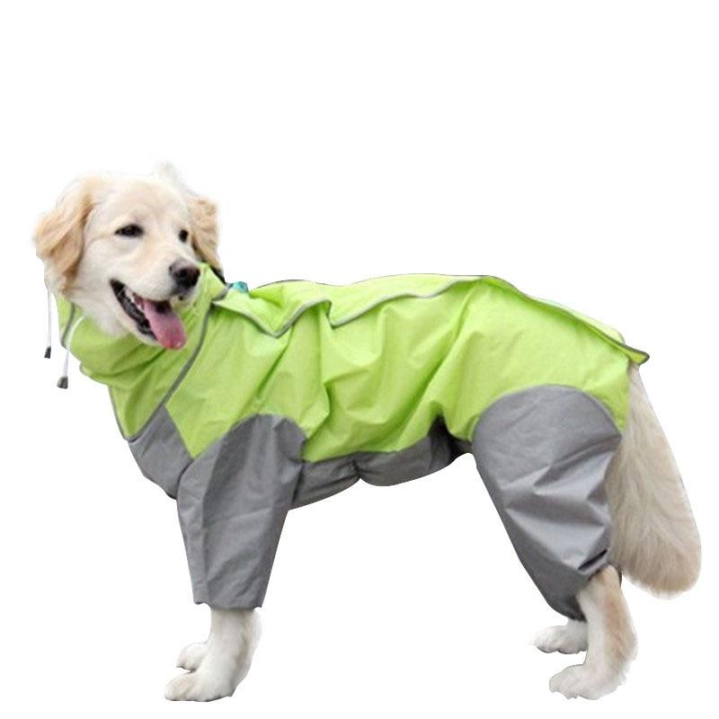 Средние породы собак. описания, особенности, названия и виды средних пород собак   животный мир