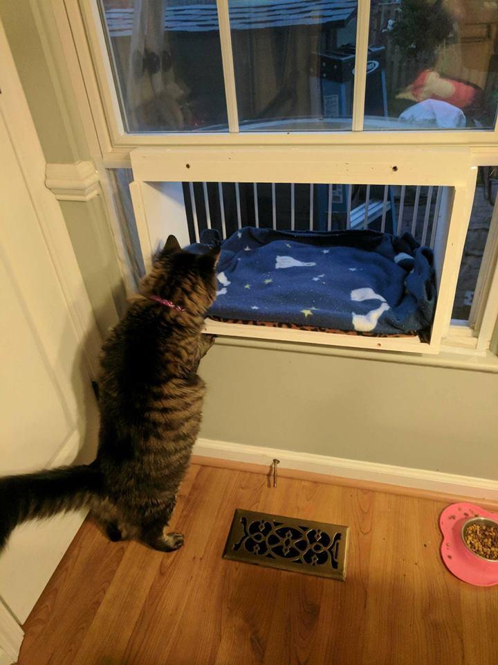 ❶ топ-10 средств от тараканов, безопасных для кошек – как избавиться от вредителей, если в доме кошка, как травить в квартире, чтобы домашние животные не пострадали