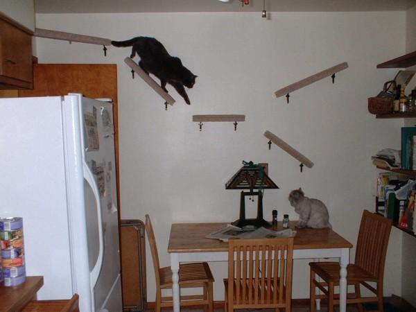 Как отвадить котов и кошек от участка?
