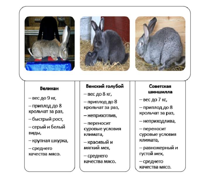 Сколько живут кролики - дневник фермера ferma-lux.ru