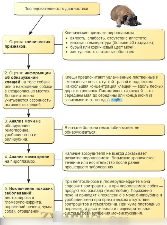 """Болезни кошек: симптомы и лечение основных заболеваний   нпк """"скифф"""""""