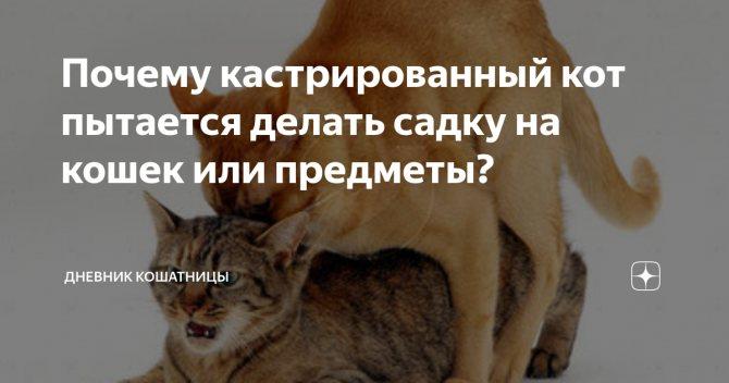 Стерилизованная кошка метит: зверье мое