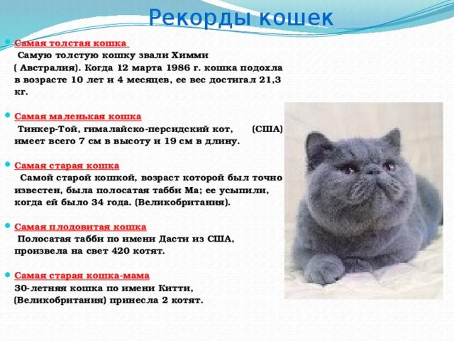 Как определить возраст котёнка по весу и зубам. можно ли и как определить возраст котёнка по внешним изменениям и поведению