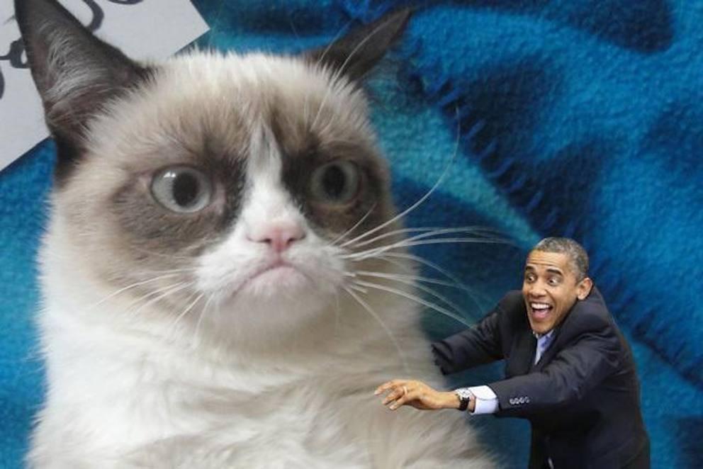 Какие есть мемы. самые известные мемы в истории интернета (40 фото). мемы с животными