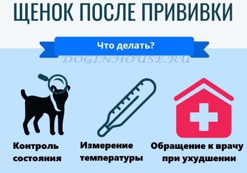 Можно ли гулять с щенком без прививок