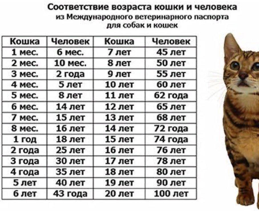 Как определить возраст котёнка по весу и зубам. можно ли и как определить возраст котёнка по внешним изменениям и поведению - автор екатерина данилова - журнал женское мнение