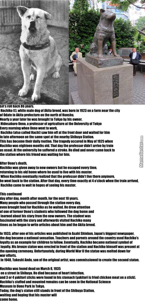Хатико: порода собаки из фильма, запомнившаяся своей дружелюбностью