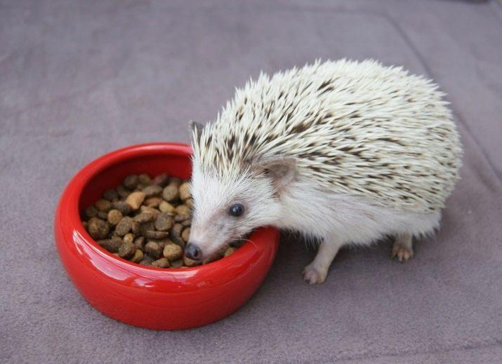 Чем и как кормить ежика? что едят ежи в домашних условиях? чем они питаются на садовом участке на даче? какие корма кушают дикие ежи дома?