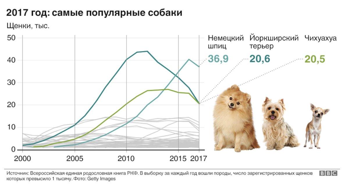 Породы собак сколько пород существует