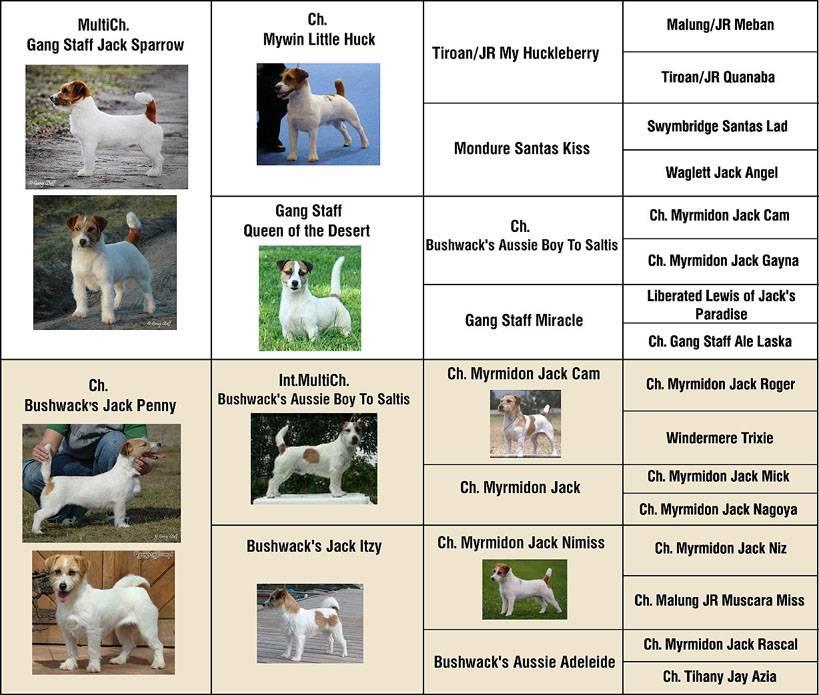 Собаки с коричневой окраской — 20 актуальных пород
