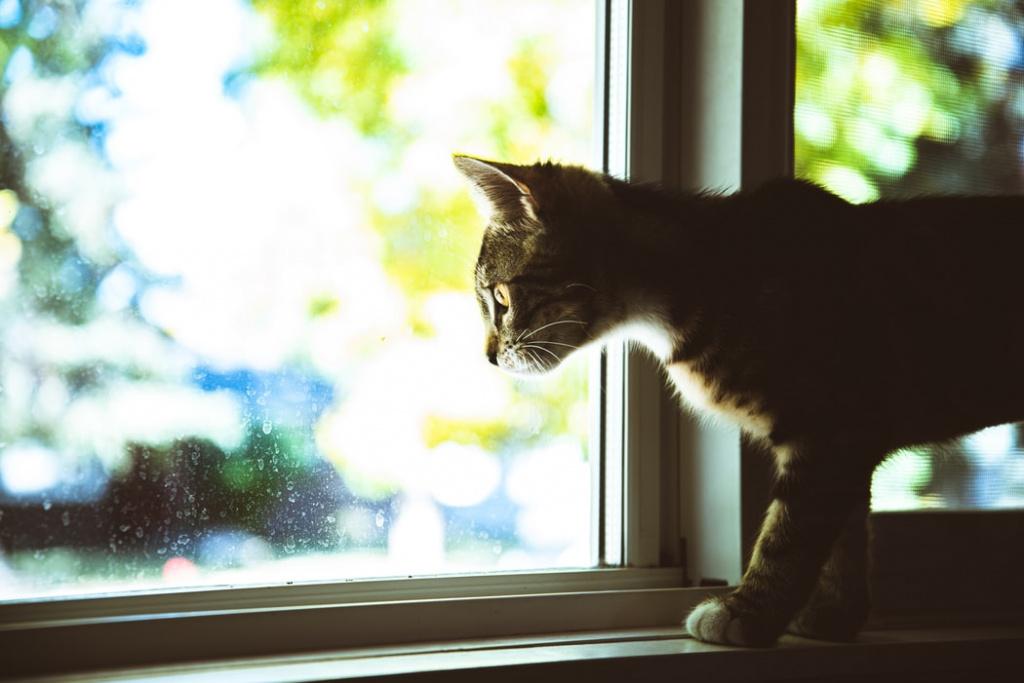 30 популярных примет и суеверий о кошках и котах