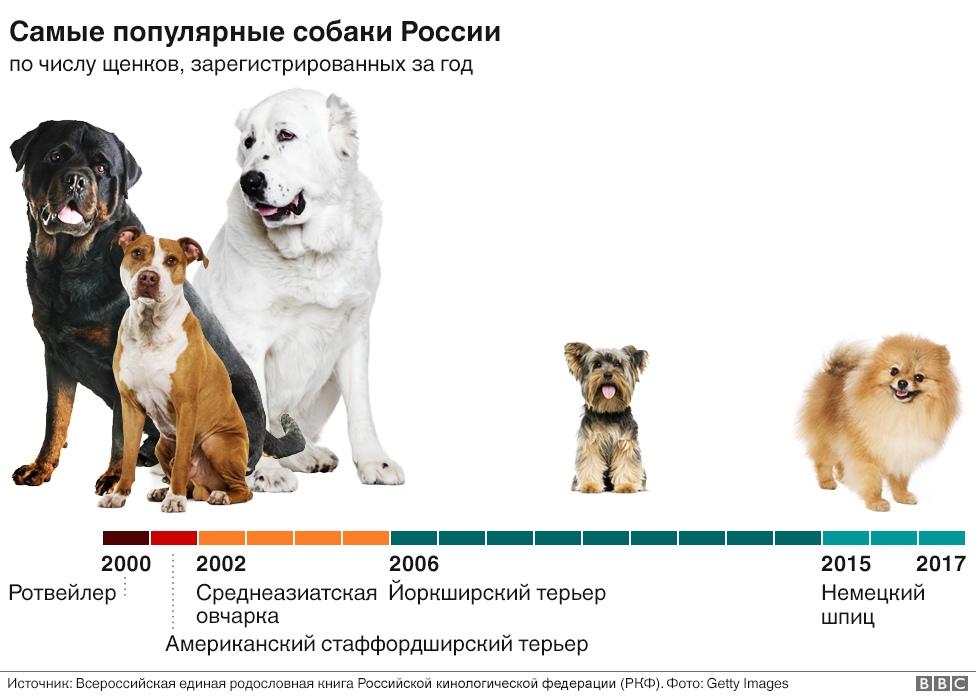 Самые долгоживущие собаки маленьких пород