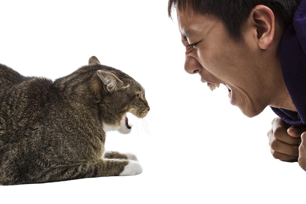 Что делать, если кот кусается и нападает: на хозяев или других животных, причины агрессии домашнего любимца, меры борьбы с нежелательным поведением