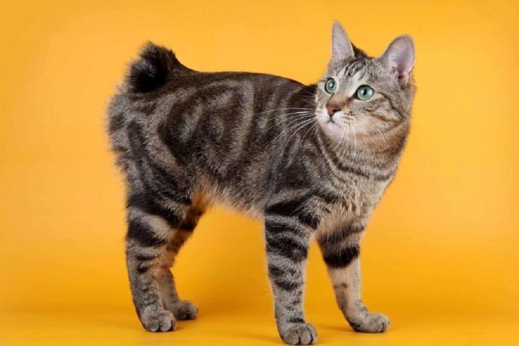 Породы больших кошек: самые крупные виды домашних котов