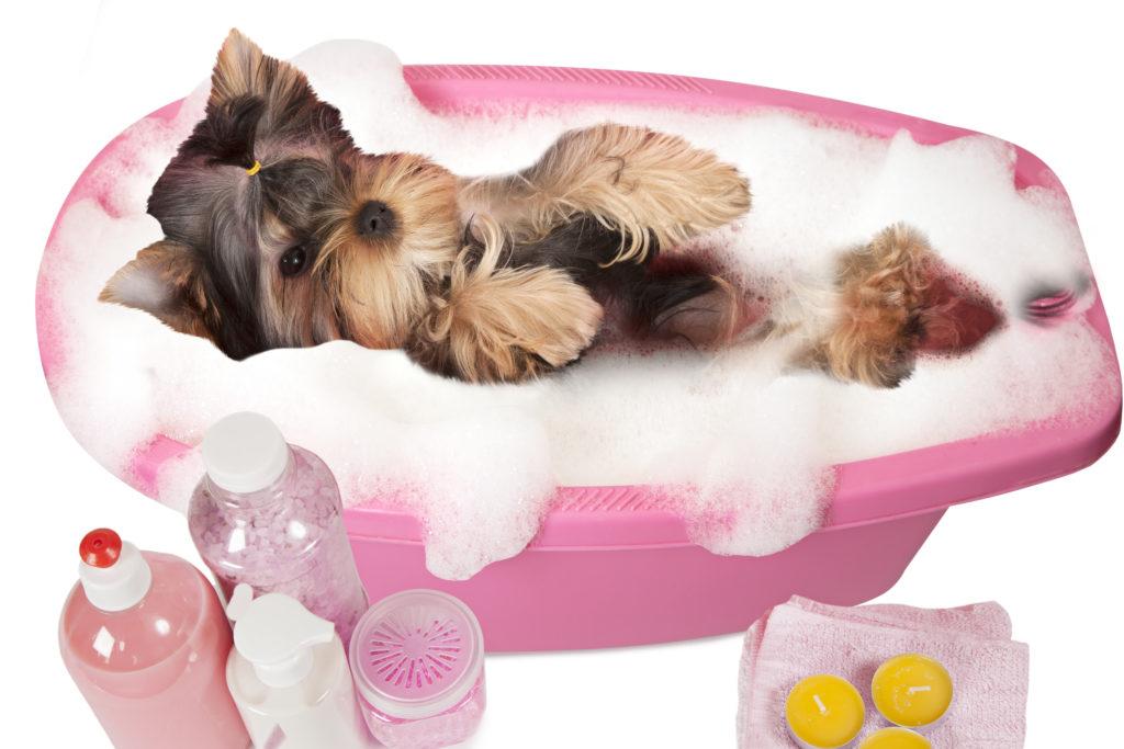 Детский шампунь для собак… да или нет?