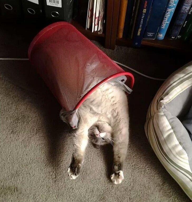 Положение кошки во время сна может многое рассказать о состоянии питомца - досуг