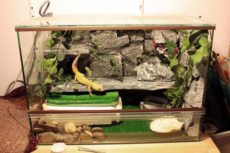 Маленькие ящерицы для домашнего содержания. домашние ящерицы – стоит ли заводить такого питомца