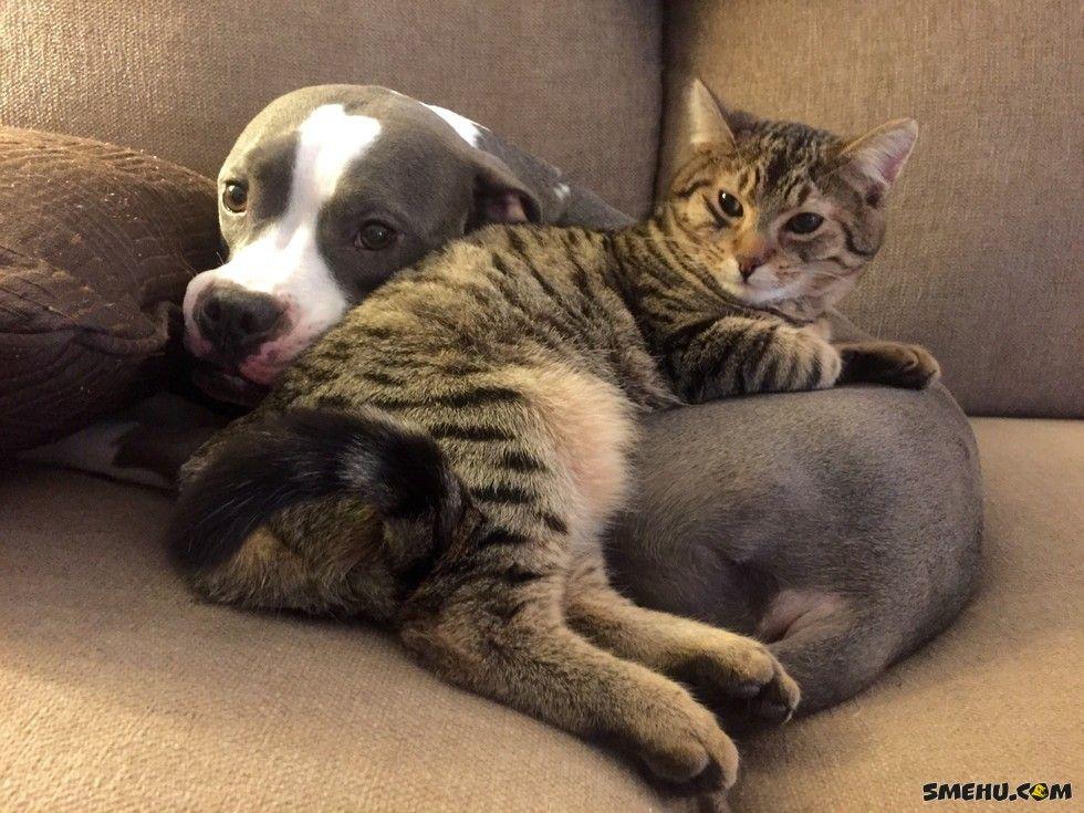 Фото и видео котят