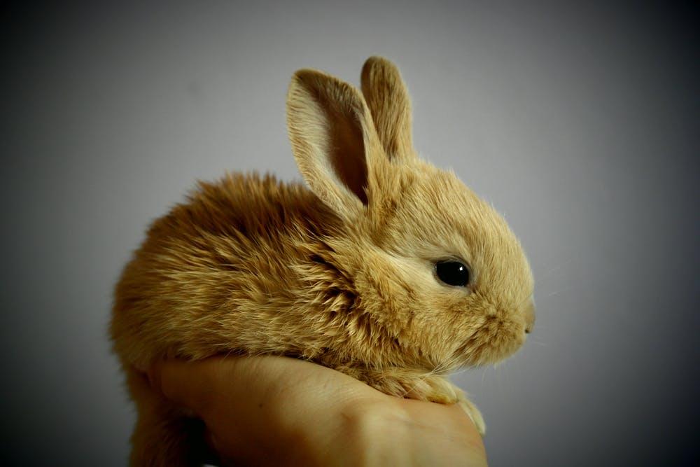 Обзор популярных пород кроликов