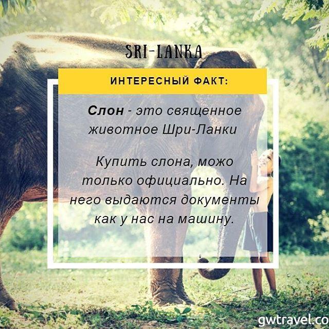 Все о слонах