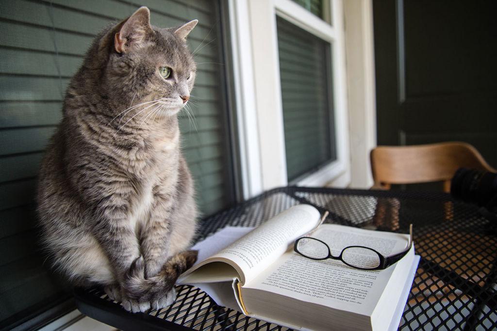 Какие породы кошек – самые умные в мире?