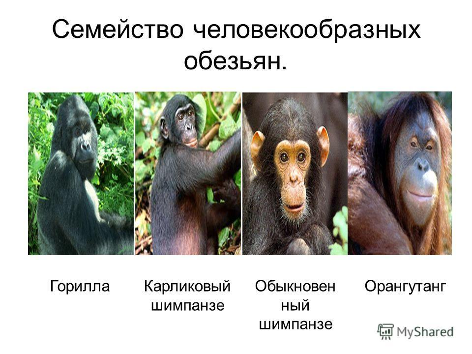 Виды обезьян с названиями, характеристика каждой породы