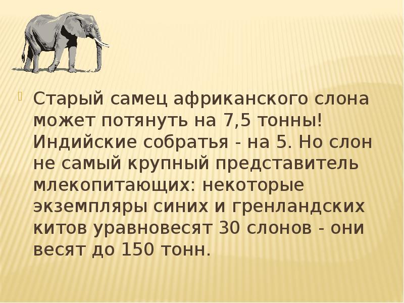 Интересные факты о слонах для детей. 10 интересных фактов о слонах.