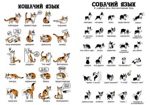 Как понимать кошку — инструкция, как понять, что хочет кошка по хвосту и мяуканью