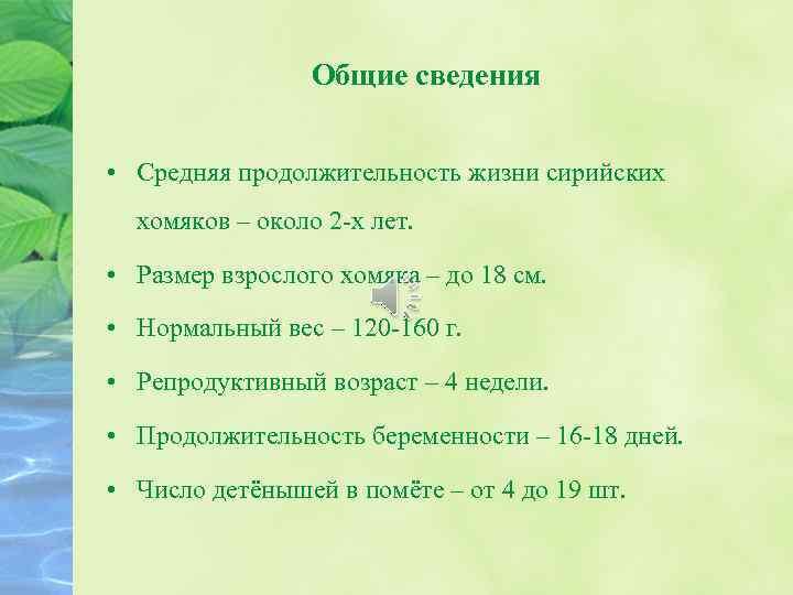 Продолжительность жизни мелких домашних животных в пересчете на человеческую — ikirov.ru - новости кирова и кировской области