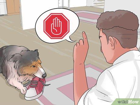 ᐉ как наказывать щенка за непослушание правильно? - zoomanji.ru