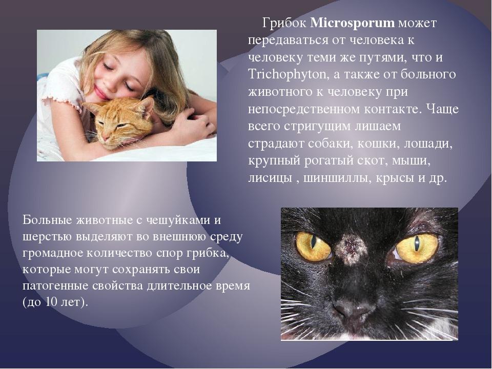 Статья: аллергия на животных у детей и взрослых: симптомы, причины, лечение