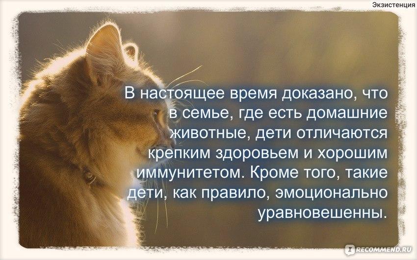 Почему кошки мурлыкают и как они это делают: новости, кошки, звук, исследования, здоровье, стресс, домашние животные