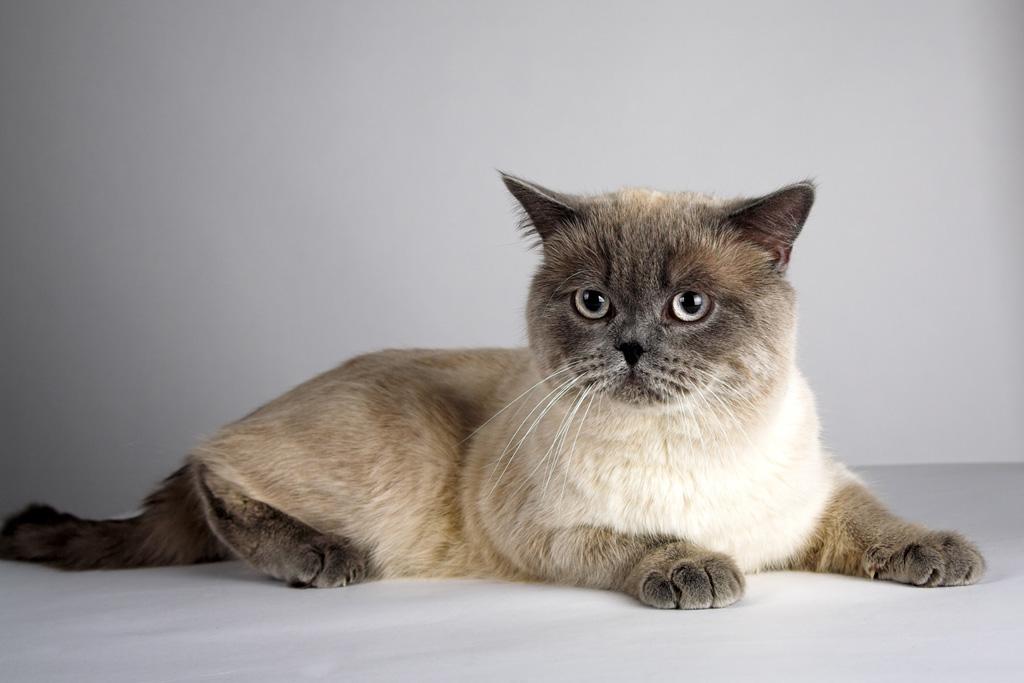 Груминг кошек — пошаговая инструкция по стрижке кота в домашних условиях