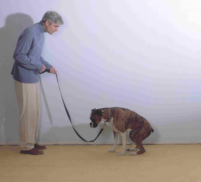 Кровавый понос у собаки: причины и лечение   ветклиника зоостатус