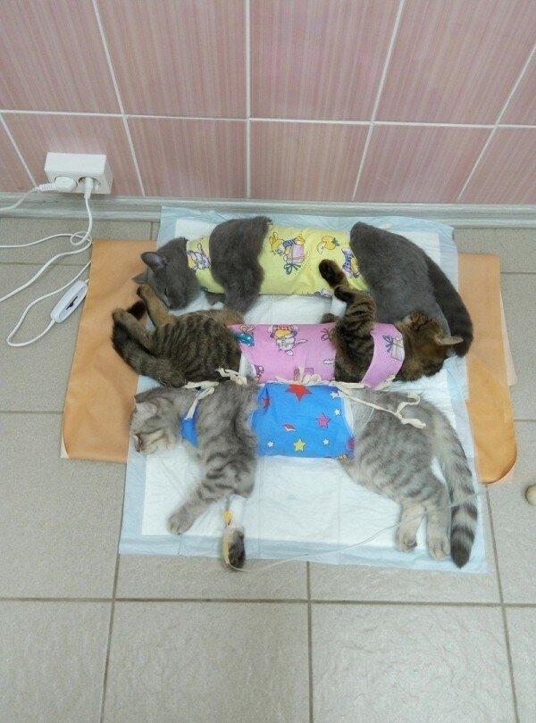 Идиопатический цистит у котов - причины, симптомы, лечение | ветклиника зоостатус