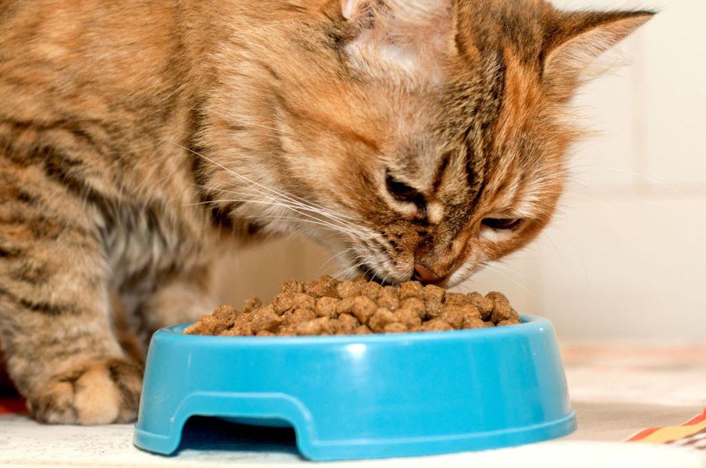 "Переводим кошку на домашнюю еду | блог ветклиники ""беланта"""