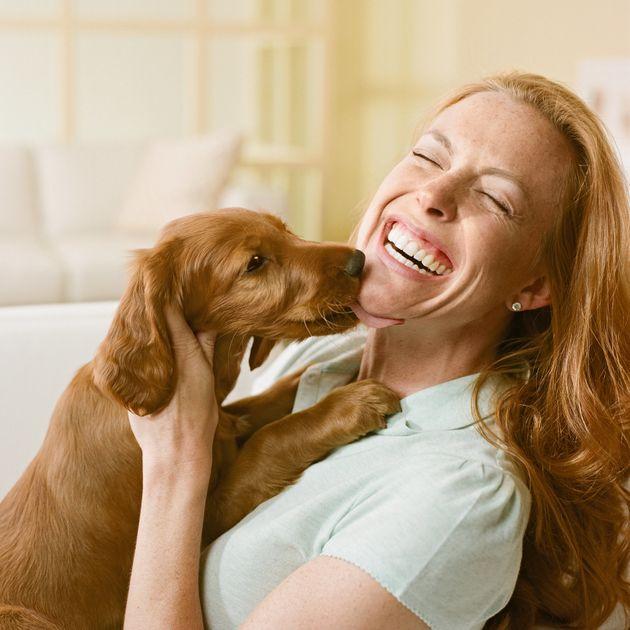 4 причины почему собака лижет ноги своему хозяину - что это значит