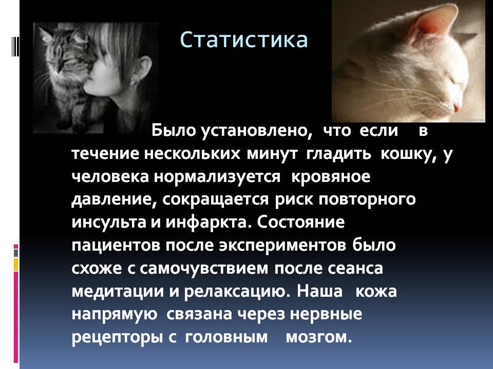 40  интересных фактов о лечебных свойствах кошек — общенет