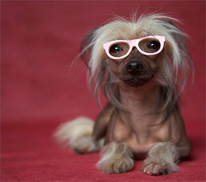 Самые смешные собаки: топ-10 пород в мире. 50 фото смешных собак, аж до слез