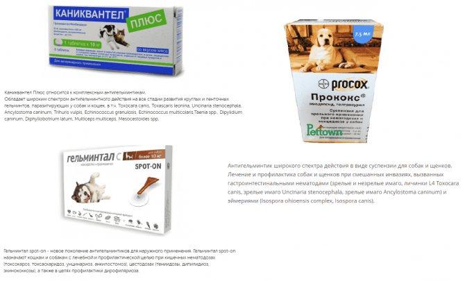 Собаки, понос у собак, причины возникновения и способы лечения поноса  у собаки