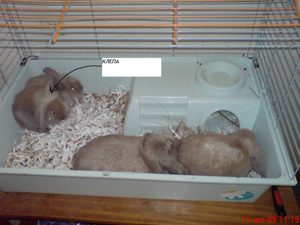 Карликовые кролики. популярные породы, основы ухода и содержания.