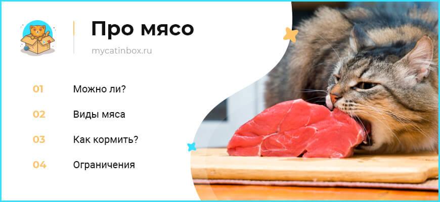 Можно ли кормить кота сырыми мясом, рыбой, яйцом, курицей