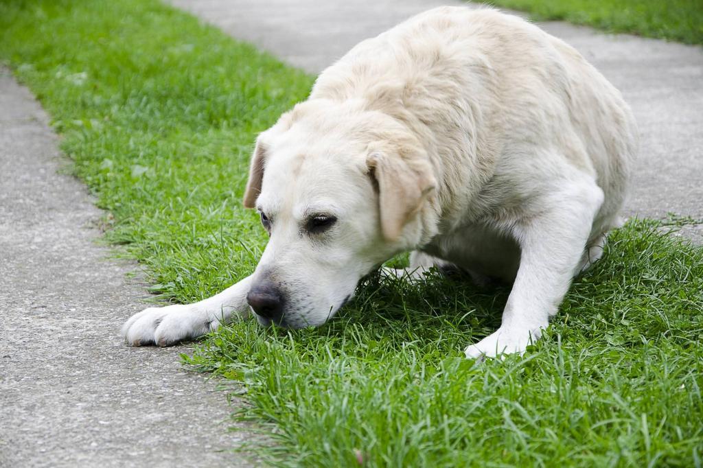 """Собаку тошнит слизью: причины, диагностика, лечение, осложнения   блог ветклиники """"беланта"""""""