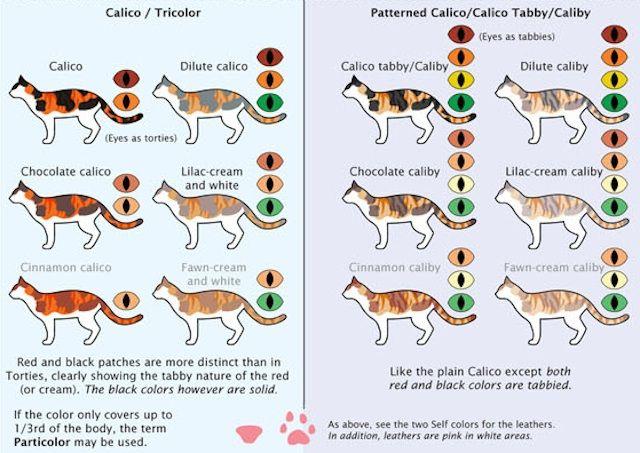 ᐉ как назвать полосатого или пятнистого котенка - ➡ motildazoo.ru
