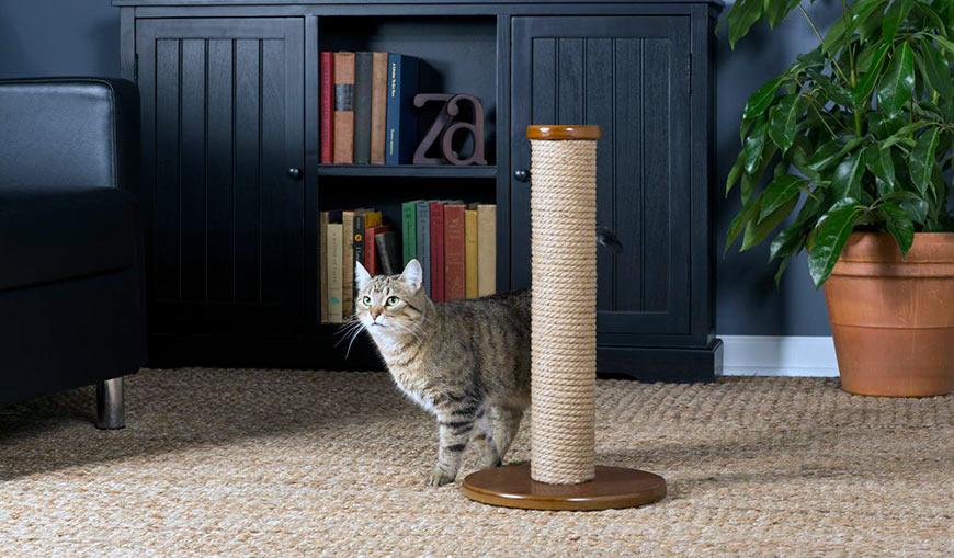 Как отучить кошку драть мебель и обои? чем обработать и как защитить мебель, чтобы кот не точил когти? выбираем средства от царапанья диванной обивки