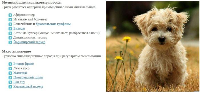 Топ-15 самых гипоаллергенных пород собак