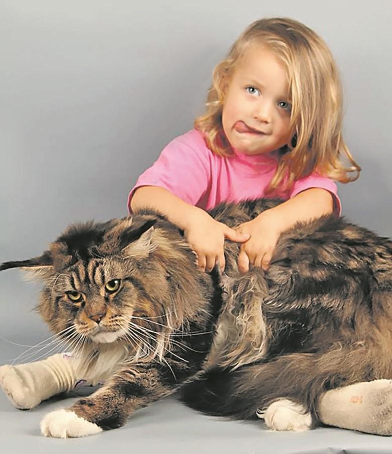 Какую породу кошек выбрать для ребенка?