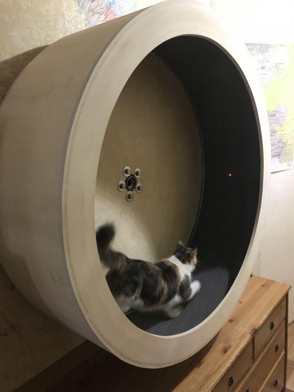Умный брус, беговая дорожка для котов и другие странные штуковины с выставки ces 2021