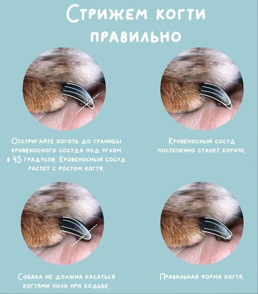 Как подстричь йорка в домашних условиях: описание процесса и необходимые инструменты