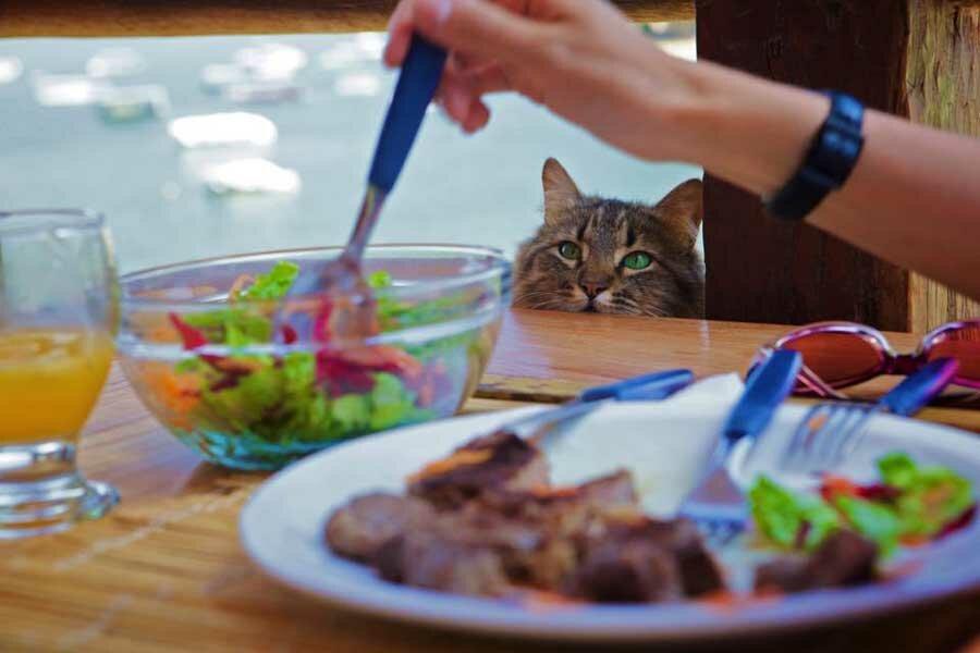 Можно ли давать коту сырое мясо и рыбу: правила кормления
